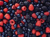 image of berries  - blueberries - JPG