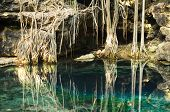 picture of cenote  - X - JPG