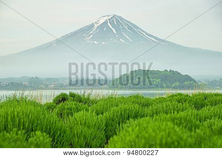 Mt Fuji In Morning At Kawaguchi, Japan