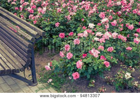 Retro Stylized Photo Of Roses Bed And Fragment Of Garden Bench.