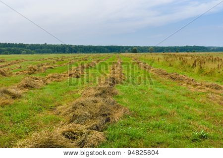Ukrainian summer landscape with rows of mown hay