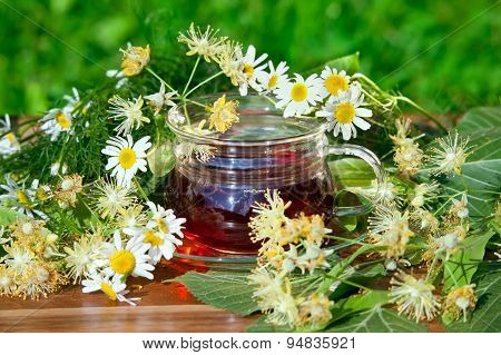 Cup of Herbal Tea with chamomile and linden flowers