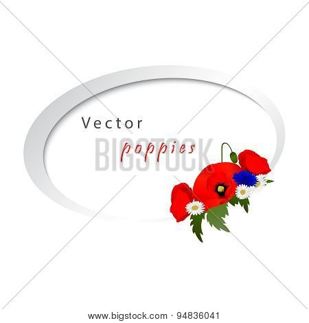 Vector white background with chamomile, cornflowers and poppies