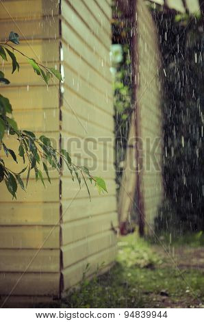 summer rain pours from the roof terrace on the branch of a tree