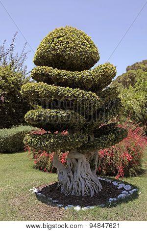 Natural Bonsai Tree In Garden
