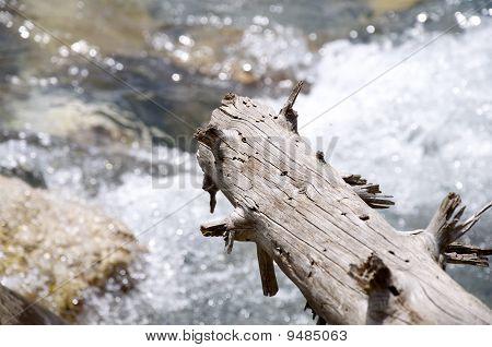 Branch Flow