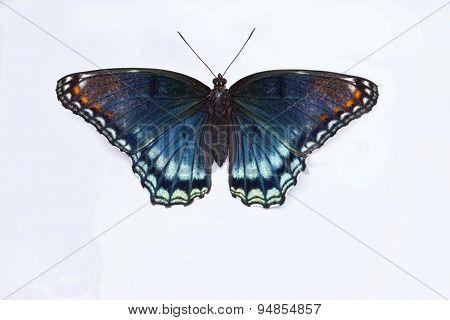 Macro Of Butterfly