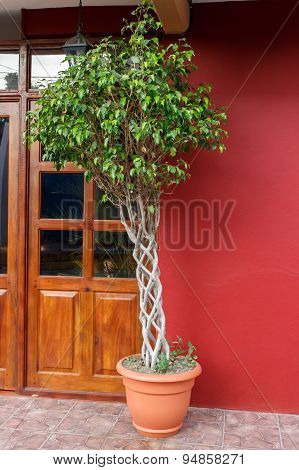 Braid Tree In Entry Door