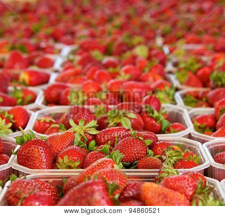 Fresh strawberries with green background, strawberries, seasonal fruits on  spring, red fruits, red