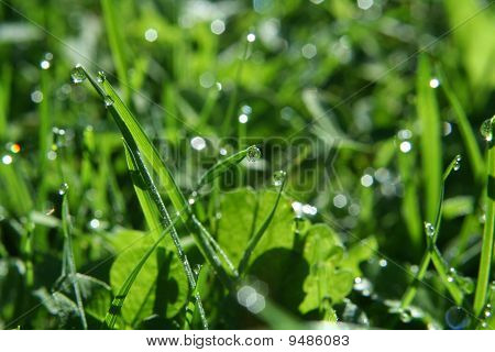 Close up blades of grass with drops of dew