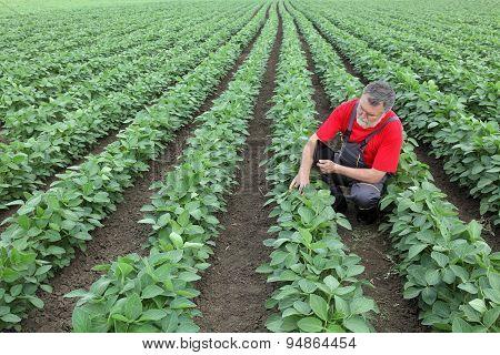 Farmer Or Agronomist In Soy Field