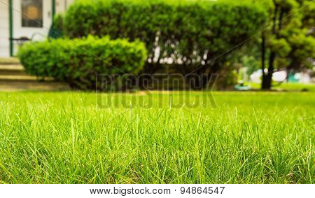 Home Lawncare