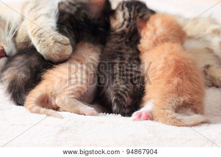 Cat nursing her kittens