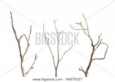 Branch Of Dead Tree Without Leaf Isolated On White
