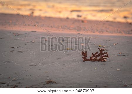 Coral And Seashells Washed Up On The Beach