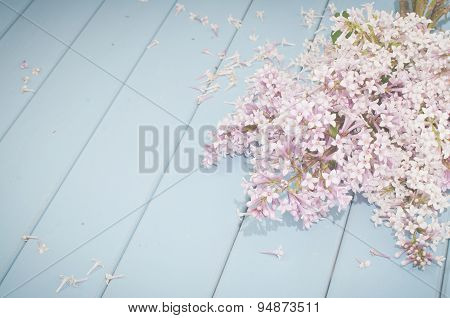 Summer Blooming Lilac