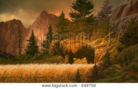 Buffalo In den Rocky Mountains