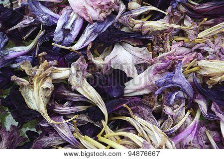 Dying petals texture