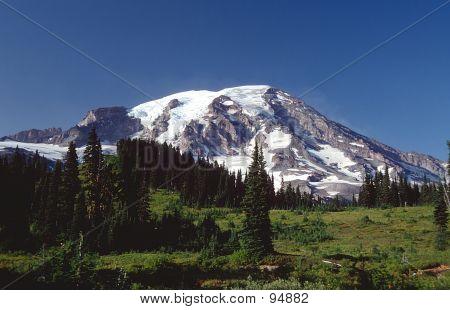 Mt. Rainier In The Spring