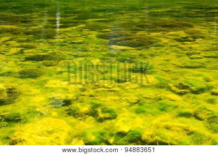 Green River Water And Fish