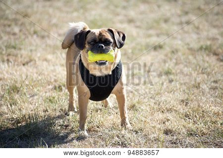 Dog With Squeeze Toy