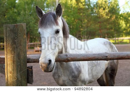 Horse In A Paddock On A Clear Summer Day