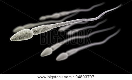 Sperm Macro On The Black Background