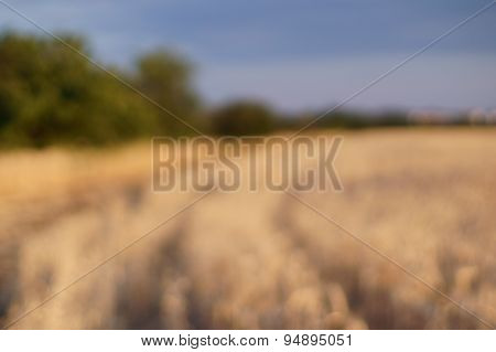 Blured Background Wheat Field.