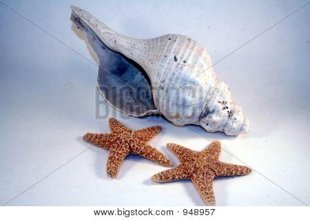 Conch N Stars