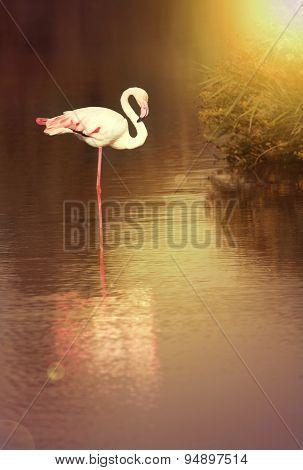 Beautiful Flamingo Silhouette