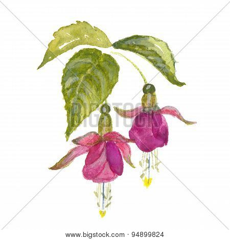Branch of pink fuchsia
