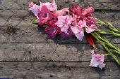 stock photo of gladiolus  - Lovely blooming gladiolus flowers on rustic wooden planks - JPG
