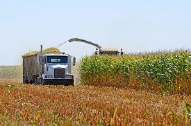 picture of food truck  - Corn farm field being harvested by a combine for agricultural feed - JPG