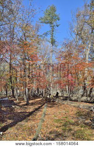 The autumn landscape in taiga. Russian Far-East.