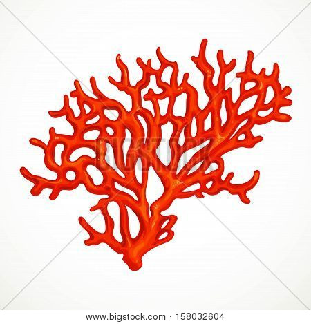 Red Corals Sea Life Object Isolated On White Background