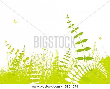 Illustration with plants. Vector