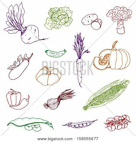 Set of vegetables of different colors, hand-drawn on an isolated white background, corn, pumpkin, carrots, cucumber, onions, kvasol, peas, tomatoes, sininkie beet, potatoes, cabbage, broccoli