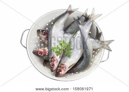 several fresh herring from he fishmarket . Fish in a sieve