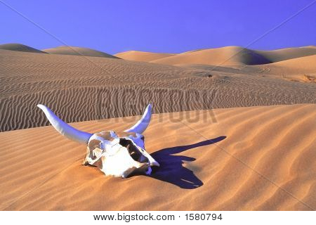 Cow Skull In The Desert
