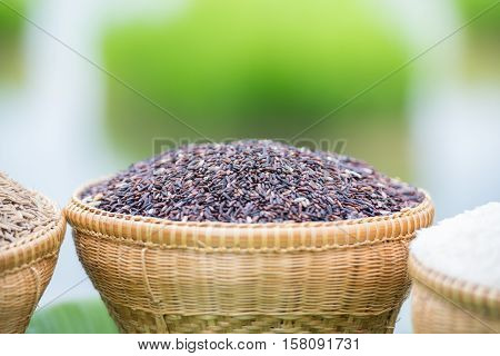 Hom Nil rice (black jasmine rice) in basket.