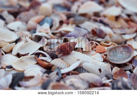 The whole shell lying on the beach. Many polygonal shells