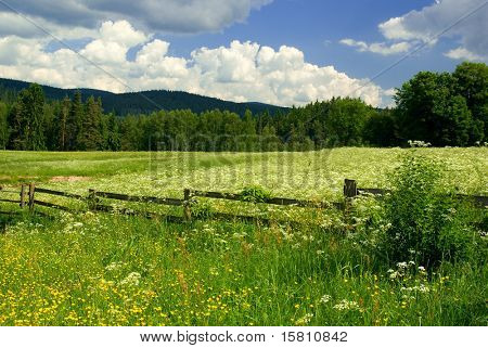 Photo of meadow with fence in sunny day.