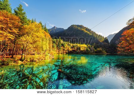 Amazing View Of Submerged Tree Trunks In The Five Flower Lake