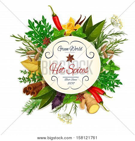 Spice and herbs poster with chilli pepper and basil, mint, dill, anise, ginger, rosemary and thyme, cinnamon and bay leaf, arugula and fennel, tarragon. Condiment, seasoning, spices and herbs cooking design elements