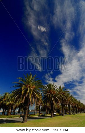 Palm trees blue skies in Perth Western