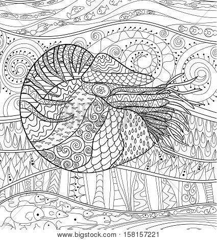 Nautilus with high details. Adult antistress coloring page. Black white sea mollusk. Abstract pattern with oceanic elements for relax coloring for grown ups in zentangle style. Vector