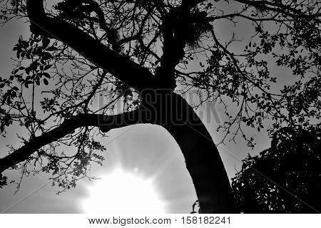 Composition that seeks to portray the light of the sun in consonance with the nature of the earth, represented by the branches of the tree.