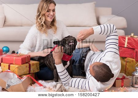 Our family member. Good looking positive happy couple sitting among gift boxes and playing with their dog while enjoying the Christmas morning