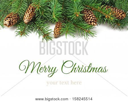 Branch of Christmas tree and cones on white background