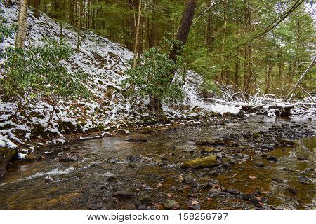 Small Trout Stream Flowing Through an Evergreen Forest in Winter